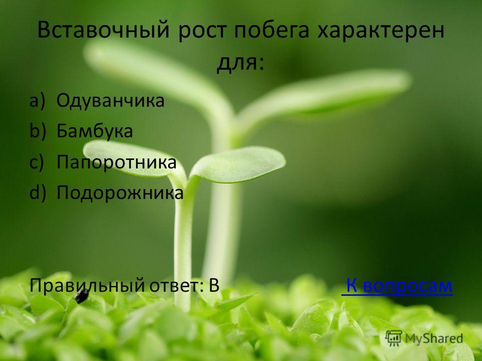 Вставочный рост побега характерен для: a)Одуванчика b)Бамбука c)Папоротника d)Подорожника Правильный ответ: В К вопросам К вопросам