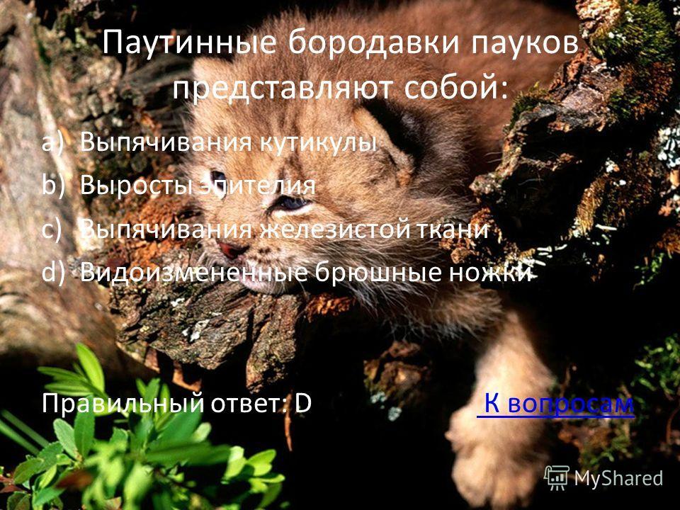 Паутинные бородавки пауков представляют собой: a)Выпячивания кутикулы b)Выросты эпителия c)Выпячивания железистой ткани d)Видоизмененные брюшные ножки Правильный ответ: D К вопросам К вопросам