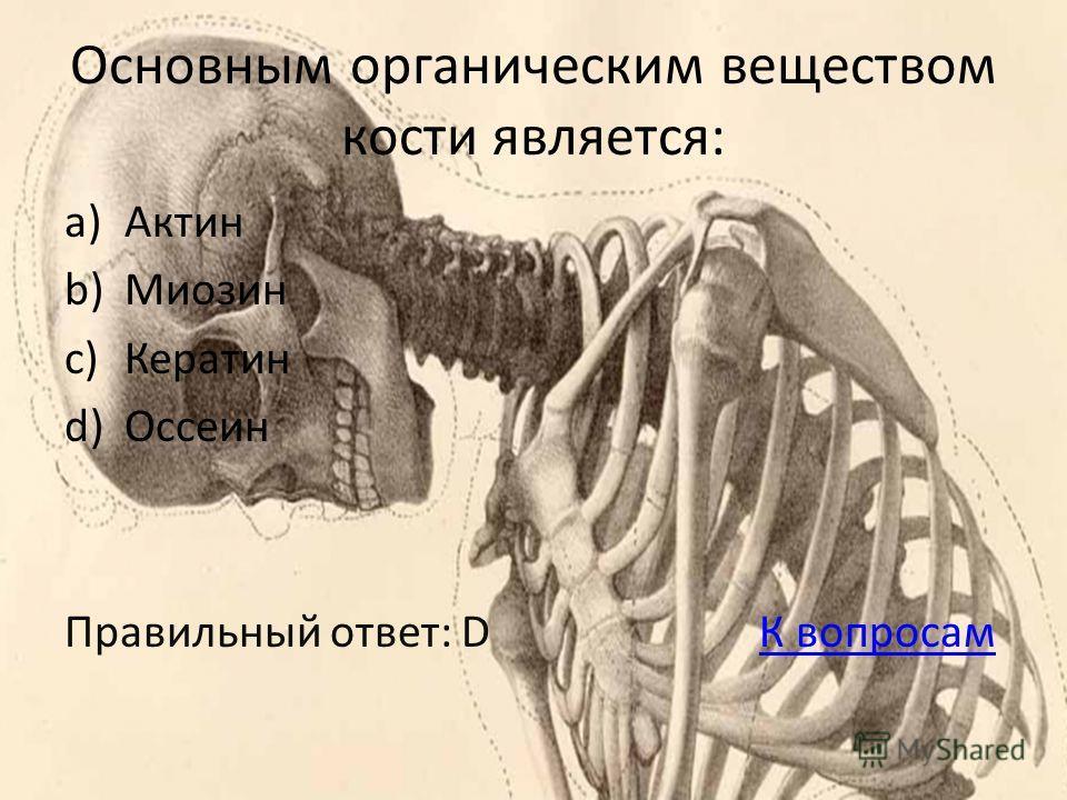 Основным органическим веществом кости является: a)Актин b)Миозин c)Кератин d)Оссеин Правильный ответ: D К вопросамК вопросам