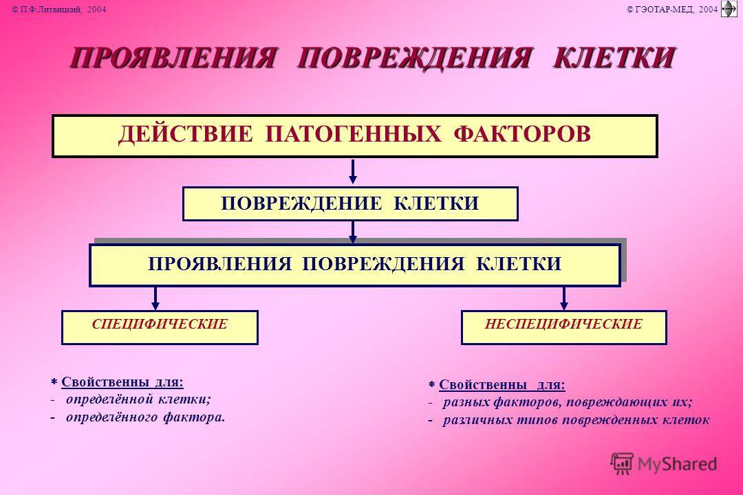 ДЕЙСТВИЕ ПАТОГЕННЫХ ФАКТОРОВ Свойственны для: - определённой клетки; - определённого фактора. Свойственны для: - разных факторов, повреждающих их; - различных типов поврежденных клеток ПОВРЕЖДЕНИЕ КЛЕТКИ ПРОЯВЛЕНИЯ ПОВРЕЖДЕНИЯ КЛЕТКИ СПЕЦИФИЧЕСКИЕНЕС