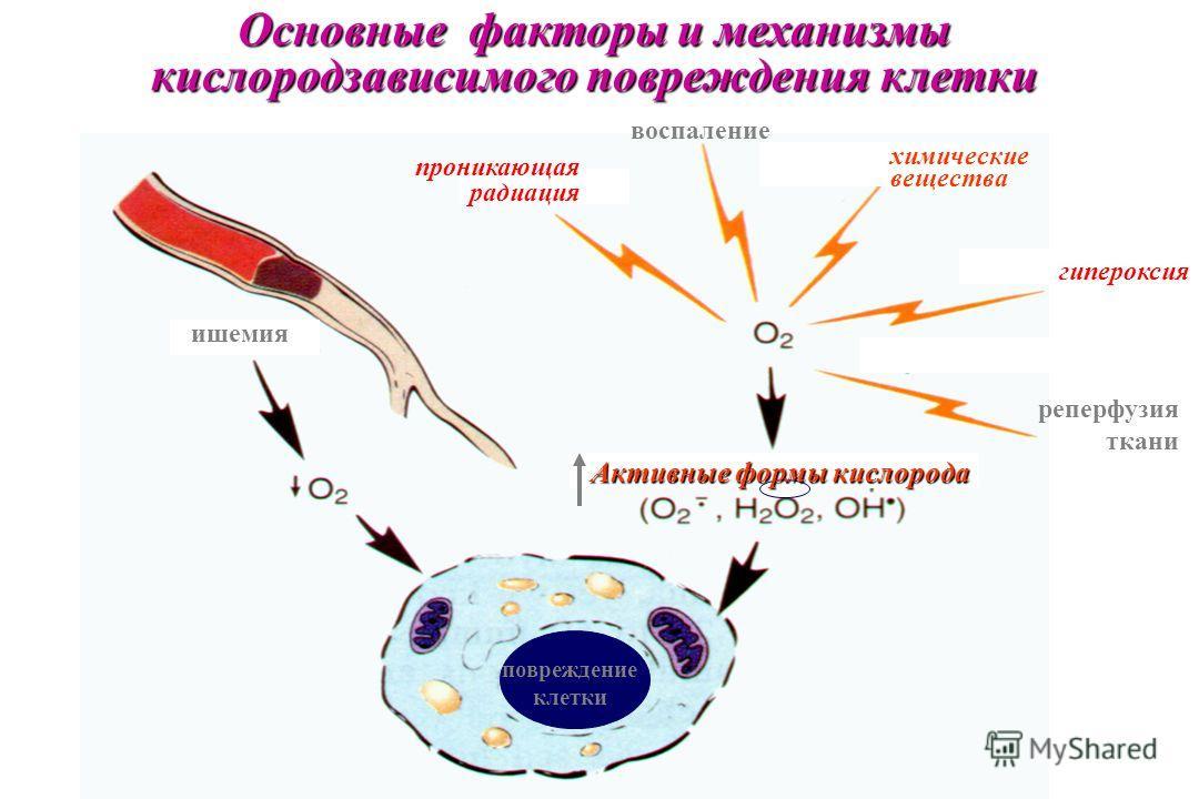 проникающая радиация воспаление химические вещества гипероксия ишемия реперфузия ткани Активные формы кислорода повреждение клетки Основные факторы и механизмы кислородзависимого повреждения клетки