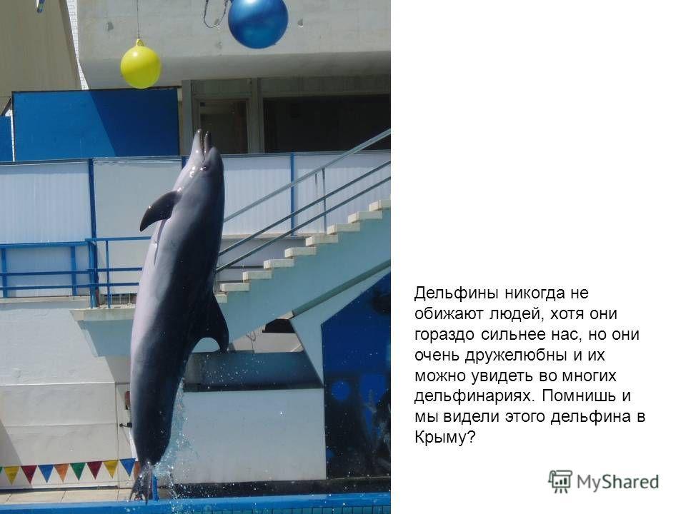 Дельфины никогда не обижают людей, хотя они гораздо сильнее нас, но они очень дружелюбны и их можно увидеть во многих дельфинариях. Помнишь и мы видели этого дельфина в Крыму?