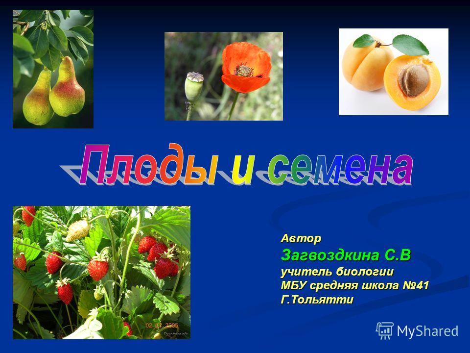 Автор Загвоздкина С.В учитель биологии МБУ средняя школа 41 Г.Тольятти