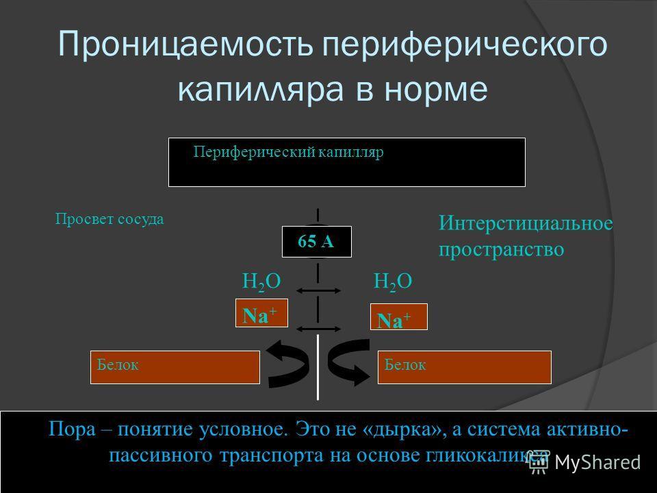 Проницаемость периферического капилляра в норме Периферический капилляр 65 А Просвет сосуда Интерстициальное пространство Na + Белок Н2ОН2ОН2ОН2О Na + Белок Пора – понятие условное. Это не «дырка», а система активно- пассивного транспорта на основе г