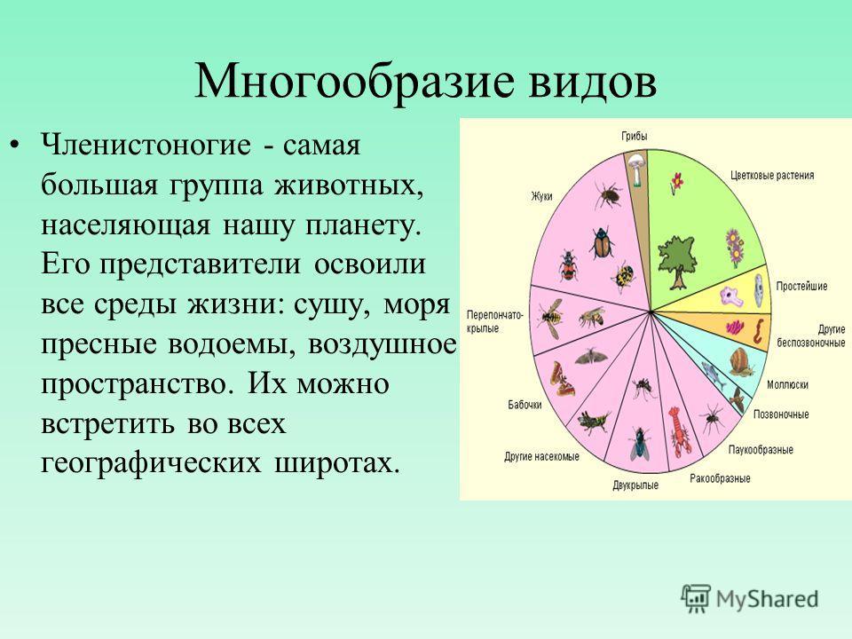 Многообразие видов Членистоногие - самая большая группа животных, населяющая нашу планету. Его представители освоили все среды жизни: сушу, моря пресные водоемы, воздушное пространство. Их можно встретить во всех географических широтах.