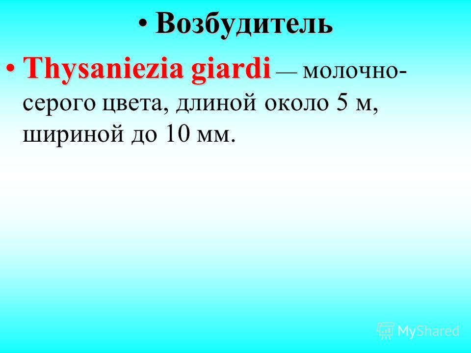 ВозбудительВозбудитель Thysaniezia giardiThysaniezia giardi молочно- серого цвета, длиной около 5 м, шириной до 10 мм.