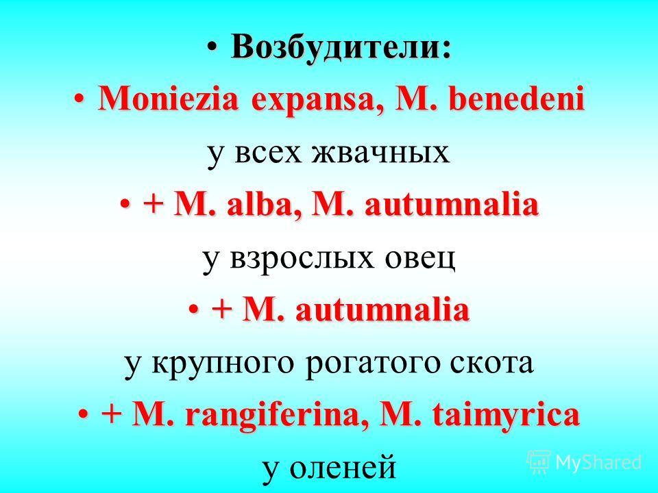 Возбудители:Возбудители: Moniezia expansa, M. benedeniMoniezia expansa, M. benedeni у всех жвачных + M. alba, M. autumnalia+ M. alba, M. autumnalia у взрослых овец + M. autumnalia+ M. autumnalia у крупного рогатого скота + M. rangiferina, M. taimyric