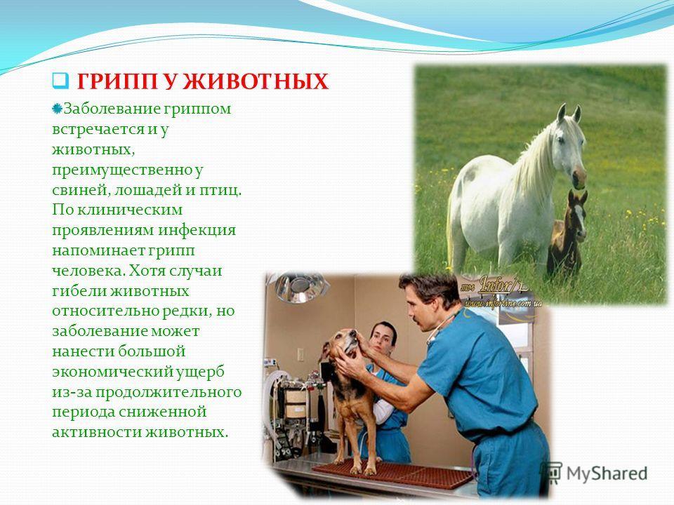 ГРИПП У ЖИВОТНЫХ Заболевание гриппом встречается и у животных, преимущественно у свиней, лошадей и птиц. По клиническим проявлениям инфекция напоминает грипп человека. Хотя случаи гибели животных относительно редки, но заболевание может нанести больш