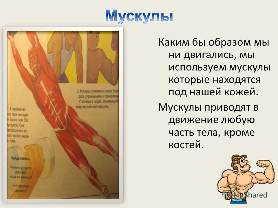Каким бы образом мы ни двигались, мы используем мускулы которые находятся под нашей кожей. Мускулы приводят в движение любую часть тела, кроме костей.