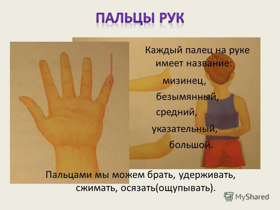 Каждый палец на руке имеет название: мизинец, большой. безымянный, средний, указательный, Пальцами мы можем брать, удерживать, сжимать, осязать(ощупывать).