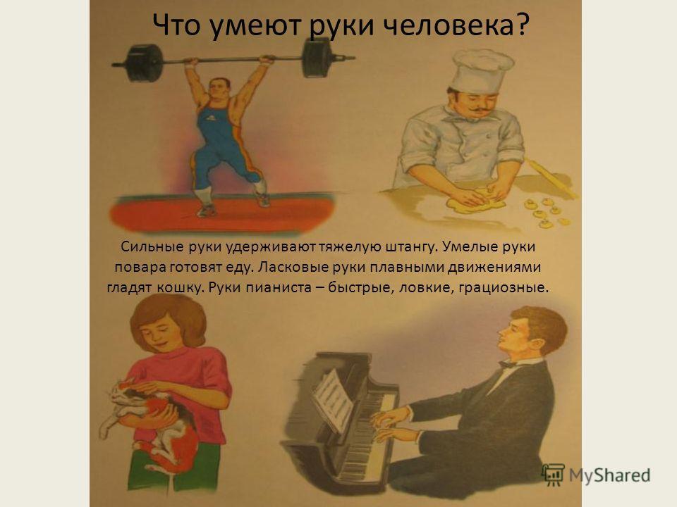 Сильные руки удерживают тяжелую штангу. Умелые руки повара готовят еду. Ласковые руки плавными движениями гладят кошку. Руки пианиста – быстрые, ловкие, грациозные. Что умеют руки человека?