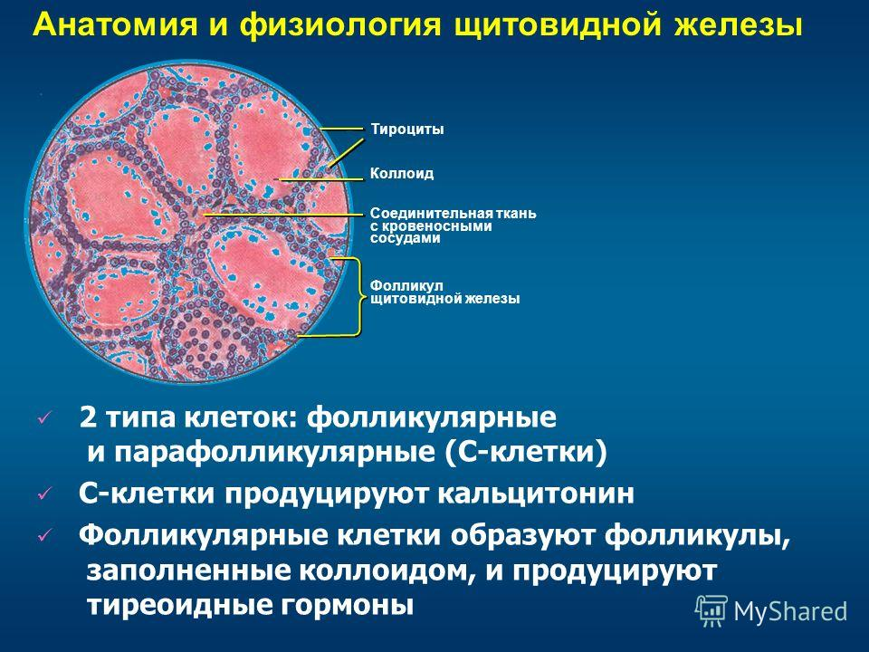 rak-shitovidnoy-zhelezi-golie-yadra