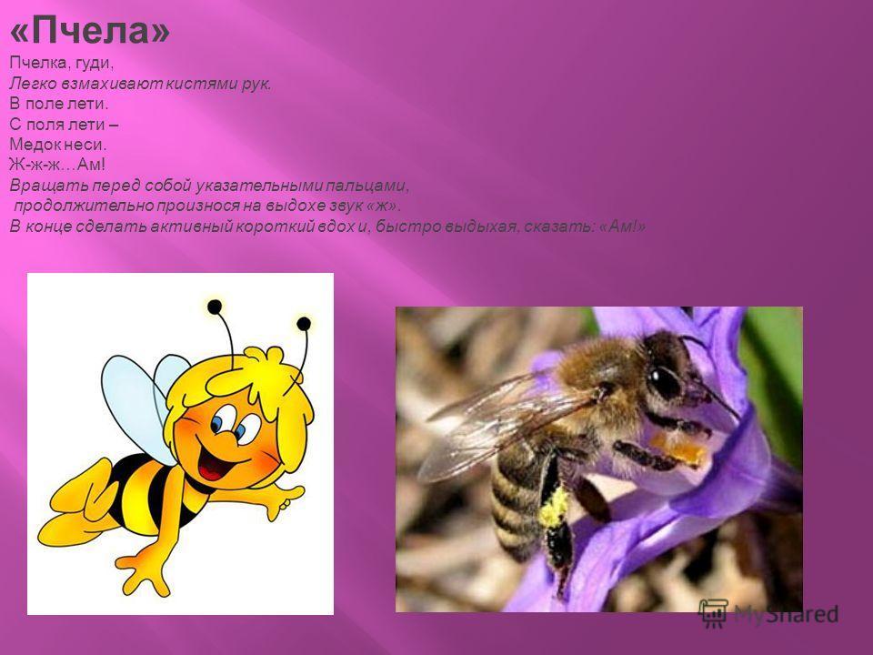 «Пчела» Пчелка, гуди, Легко взмахивают кистями рук. В поле лети. С поля лети – Медок неси. Ж-ж-ж…Ам! Вращать перед собой указательными пальцами, продолжительно произнося на выдохе звук «ж». В конце сделать активный короткий вдох и, быстро выдыхая, ск