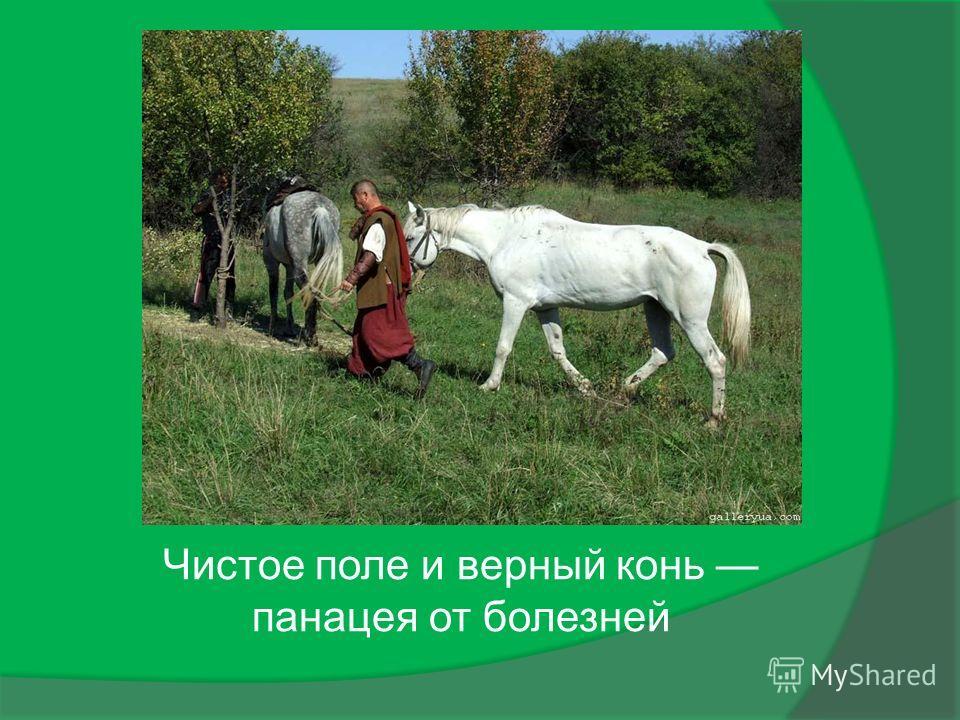 Чистое поле и верный конь панацея от болезней
