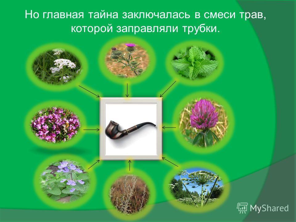 Но главная тайна заключалась в смеси трав, которой заправляли трубки.