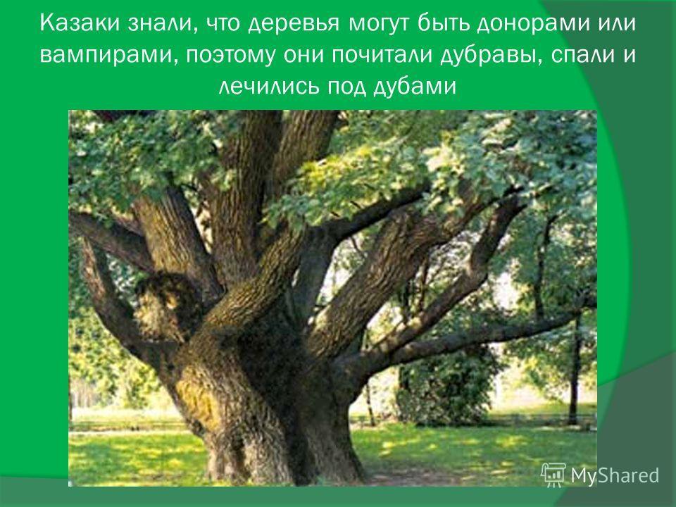 Казаки знали, что деревья могут быть донорами или вампирами, поэтому они почитали дубравы, спали и лечились под дубами