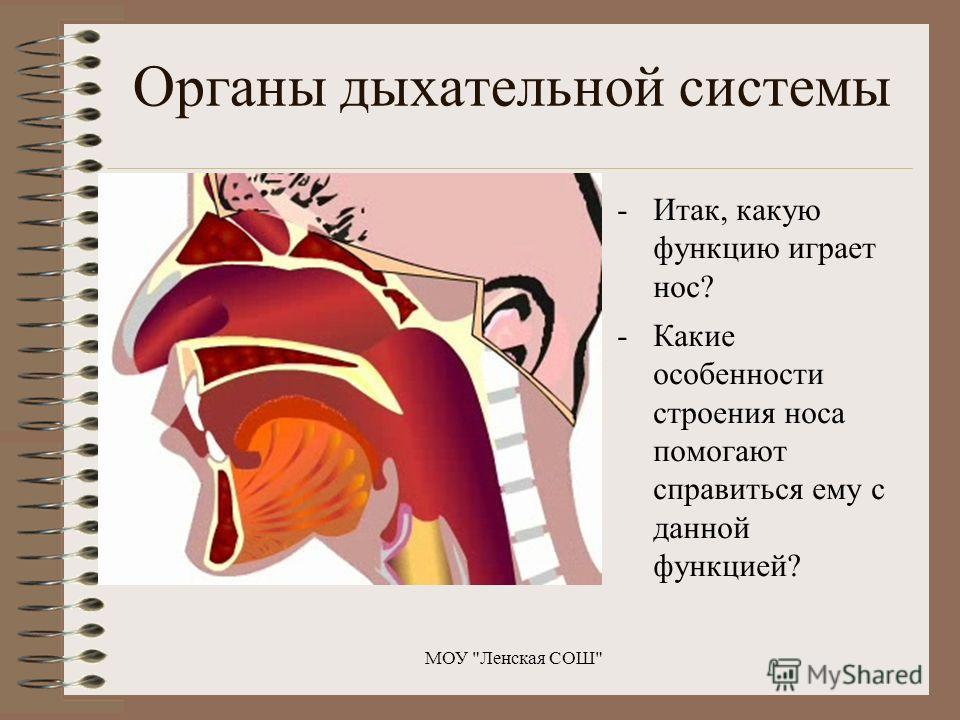 Органы дыхательной системы -Итак, какую функцию играет нос? -Какие особенности строения носа помогают справиться ему с данной функцией? МОУ Ленская СОШ
