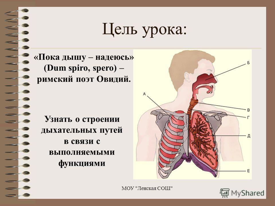 Цель урока: Узнать о строении дыхательных путей в связи с выполняемыми функциями МОУ Ленская СОШ «Пока дышу – надеюсь» (Dum spiro, spero) – римский поэт Овидий.