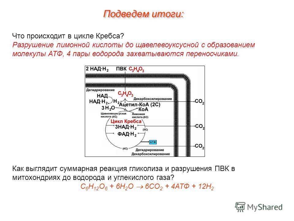 Что происходит в цикле Кребса? Разрушение лимонной кислоты до щавелевоуксусной с образованием молекулы АТФ, 4 пары водорода захватываются переносчиками. Как выглядит суммарная реакция гликолиза и разрушения ПВК в митохондриях до водорода и углекислог
