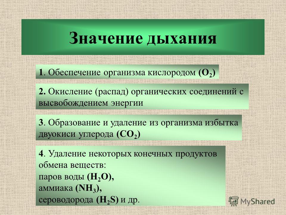 Значение дыхания 1. Обеспечение организма кислородом (О 2 ) 2. Окисление (распад) органических соединений с высвобождением энергии 3. Образование и удаление из организма избытка двуокиси углерода (CO 2 ) 4. Удаление некоторых конечных продуктов обмен