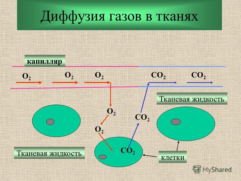 Диффузия газов в тканях O2O2 O2O2 O2O2 O2O2 O2O2 CO 2 капилляр Тканевая жидкость клетки