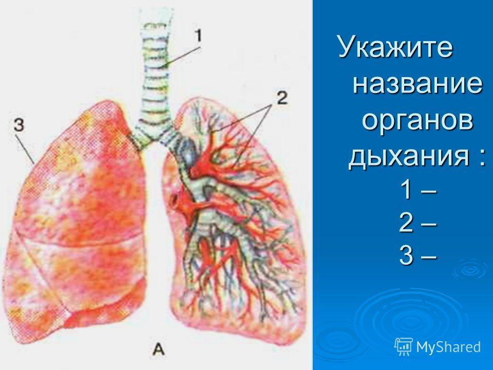 Укажите название органов дыхания : 1 – 2 – 3 –
