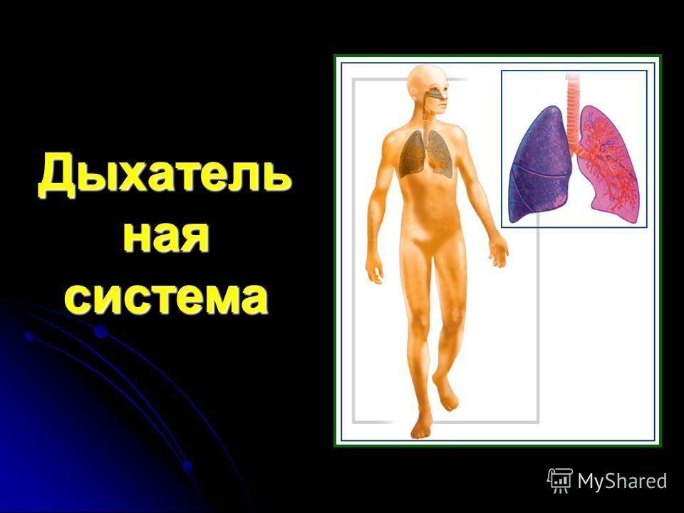 Дыхатель ная система