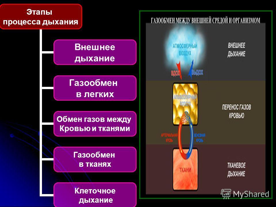 Этапы процесса дыхания Внешнее дыхание Газообмен в легких Обмен газов между Кровью и тканями Газообмен в тканях Клеточное дыхание