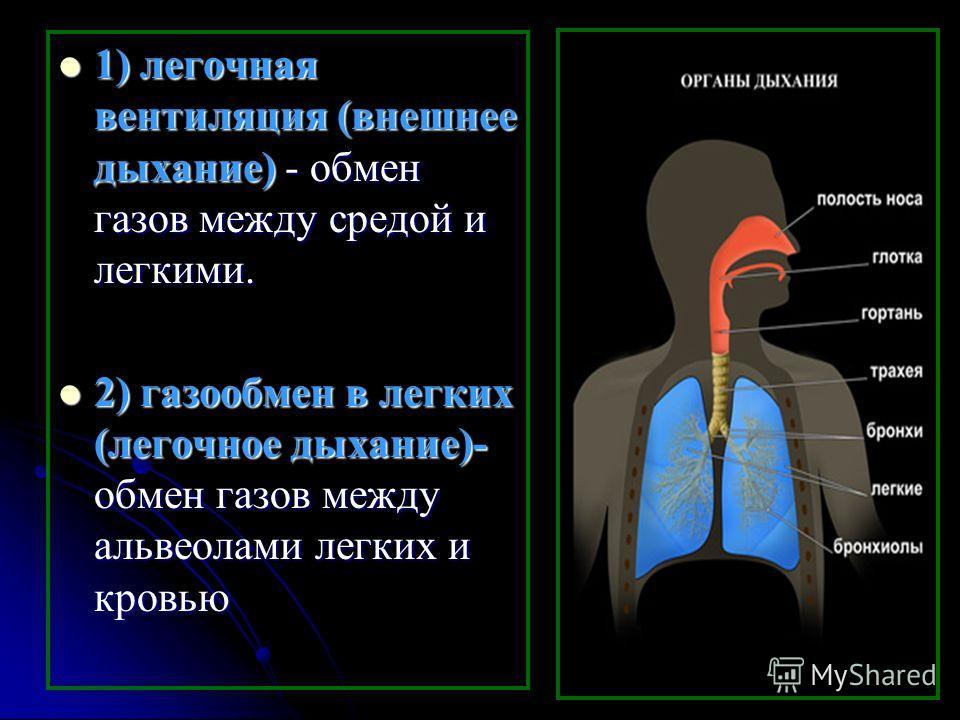1) легочная вентиляция (внешнее дыхание) - обмен газов между средой и легкими. 1) легочная вентиляция (внешнее дыхание) - обмен газов между средой и легкими. 2) газообмен в легких (легочное дыхание)- обмен газов между альвеолами легких и кровью 2) га