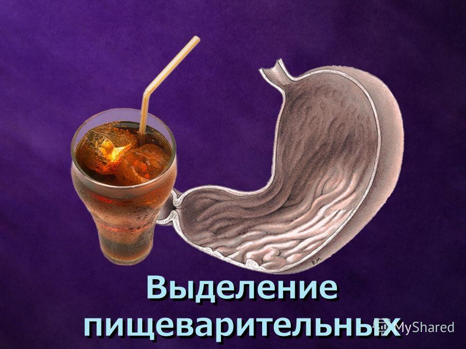 Выделение пищеварительных соков Выделение пищеварительных соков