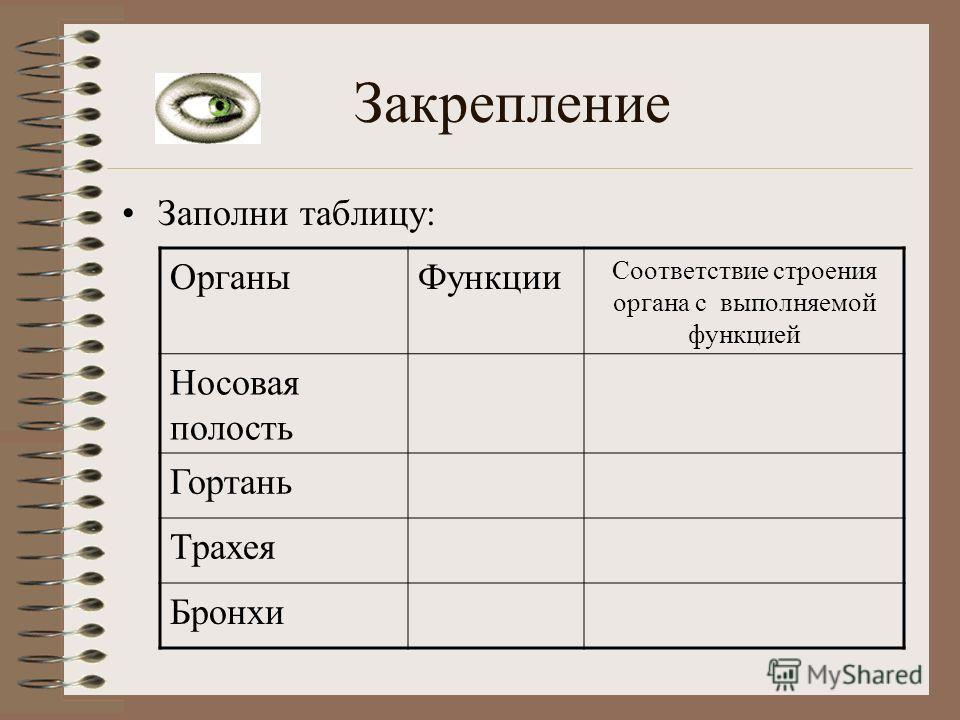 Закрепление Заполни таблицу: ОрганыФункции Соответствие строения органа с выполняемой функцией Носовая полость Гортань Трахея Бронхи