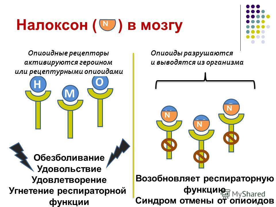 H Налоксон ( ) в мозгу H O M O M N N N Обезболивание Удовольствие Удовлетворение Угнетение респираторной функции Возобновляет респираторную функцию Синдром отмены от опиоидов Опиоиды разрушаются и выводятся из организма Опиоидные рецепторы активируют