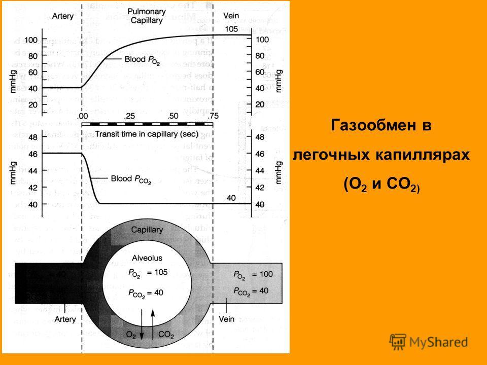 Газообмен в легочных капиллярах (O 2 и CO 2) PO 2 = 40 PCO 2 = 46