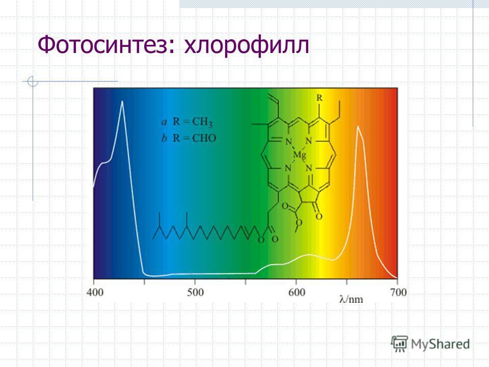 Фотосинтез: хлорофилл