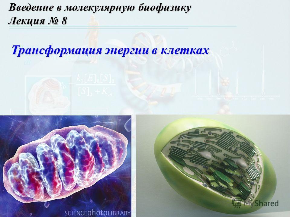 Введение в молекулярную биофизику Лекция 8 Трансформация энергии в клетках