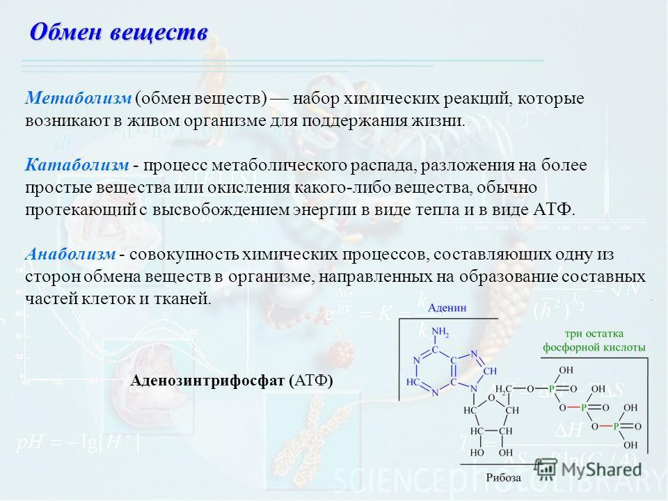 Метаболизм (обмен веществ) набор химических реакций, которые возникают в живом организме для поддержания жизни. Катаболизм - процесс метаболического распада, разложения на более простые вещества или окисления какого-либо вещества, обычно протекающий