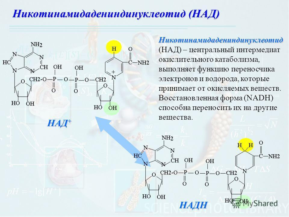 Никотинамидадениндинуклеотид (НАД) – центральный интермедиат окислительного катаболизма, выполняет функцию переносчика электронов и водорода, которые принимает от окисляемых веществ. Восстановленная форма (NADH) способна переносить их на другие вещес