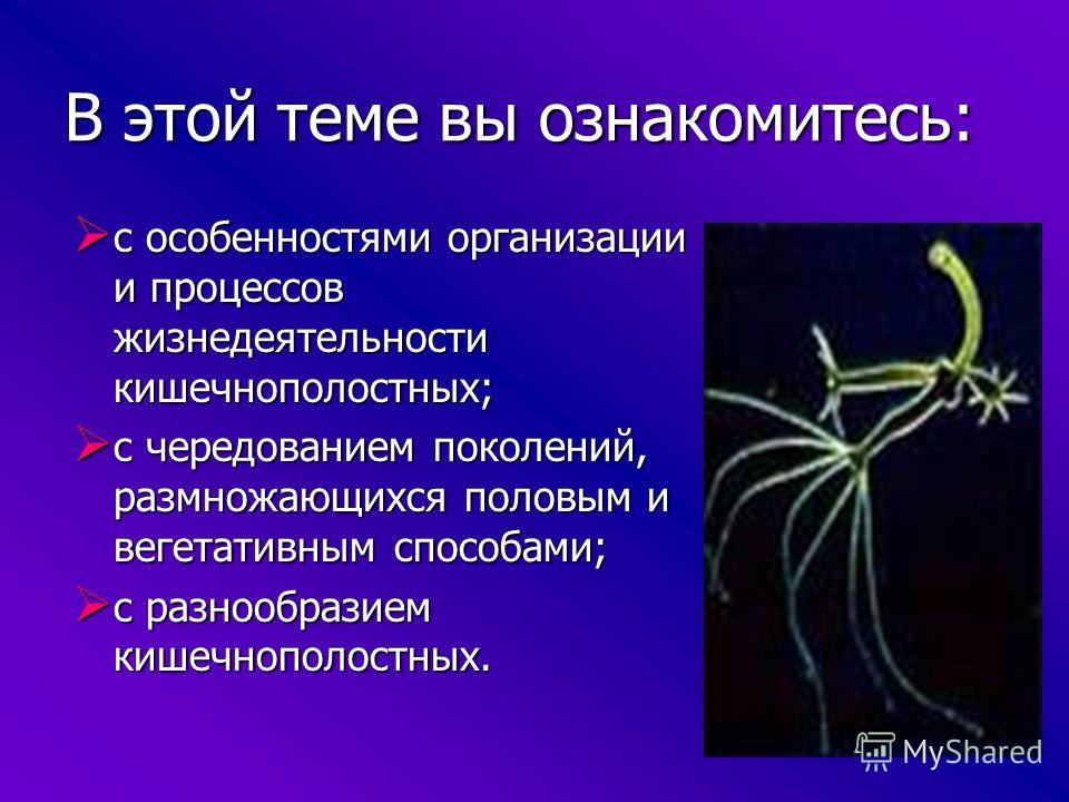 Подцарство: многоклеточные животные Тип: кишечнополостные