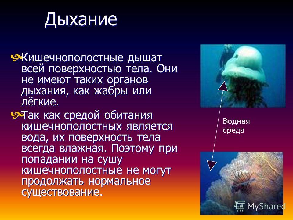 Общая характеристика Существует свыше 9000 видов. Обитают в воде. Присуща радиальная симметрия тела. Присущ гетеротрофный тип питания. Дышат поверхностью тела. Кровеносная система отсутствует. Нервная система диффузная. Являются важной цепью питания.