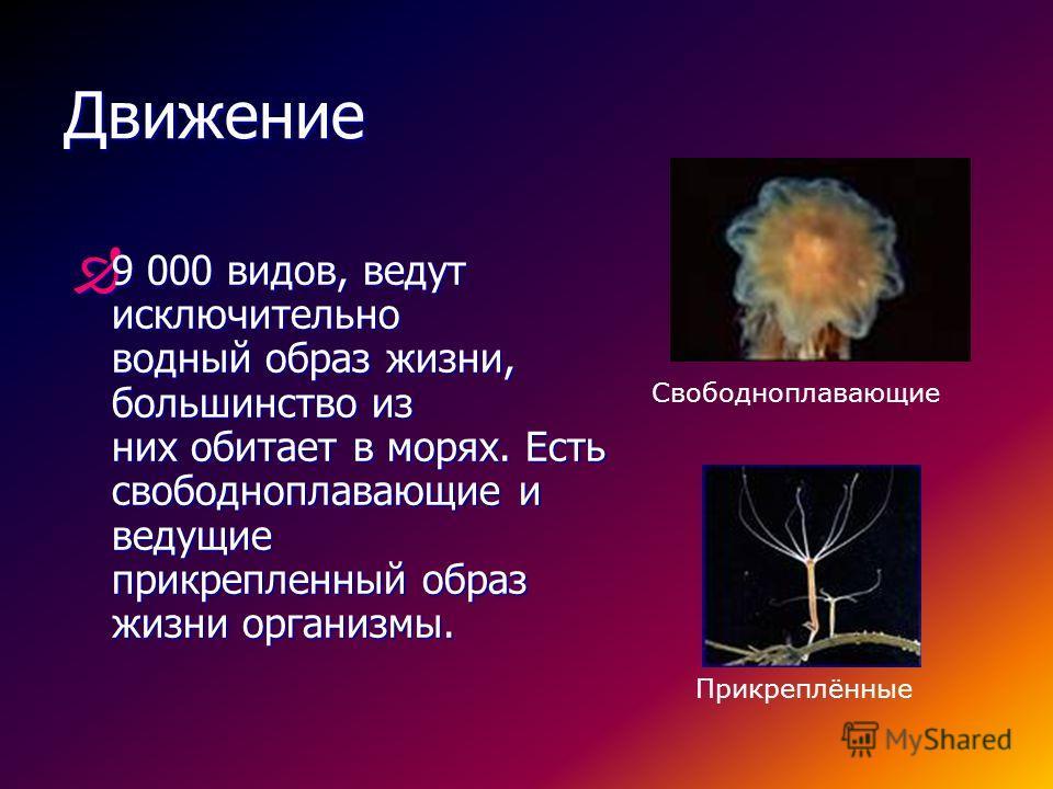 Слои клеток кишечнополостных Название клеток Слой клеток Функции 1 Эпитально - мышечные ЭктодермальныеДвижение 2 Стрекальные клетки Эктодермальные Защита, поражение 3 ПромежуточныеЭктодермальныеРегенерация 4 НервныеЭктодермальные Ответ на раздражител