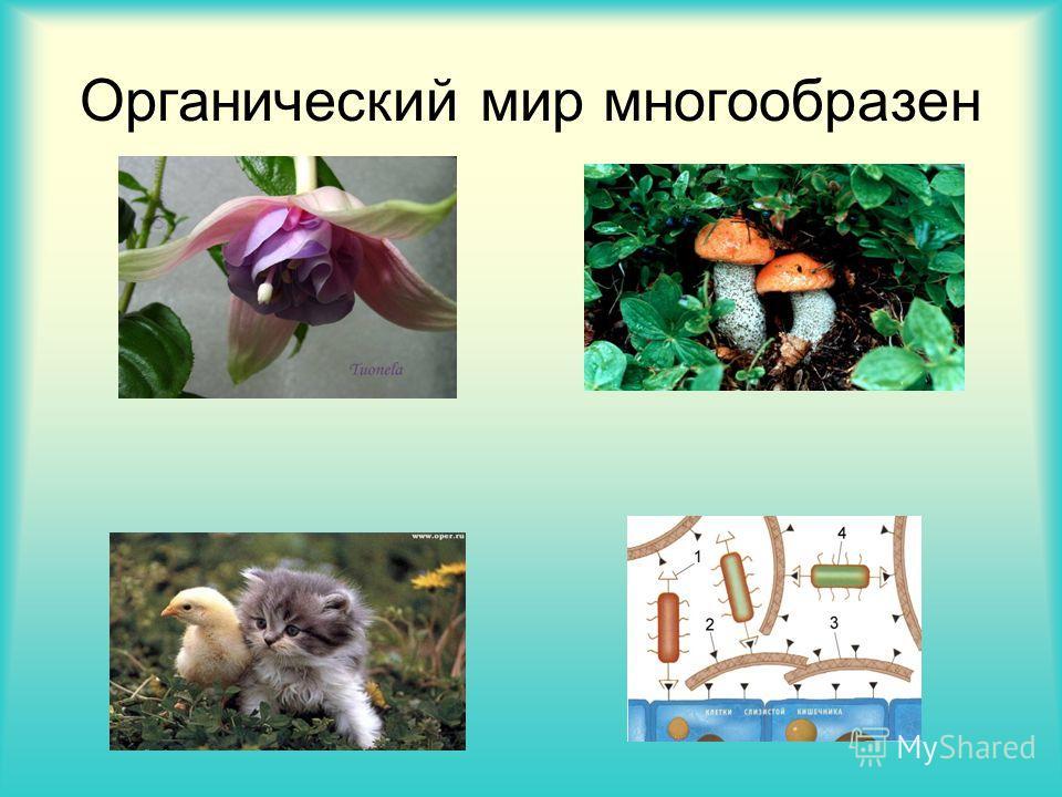 Органический мир многообразен