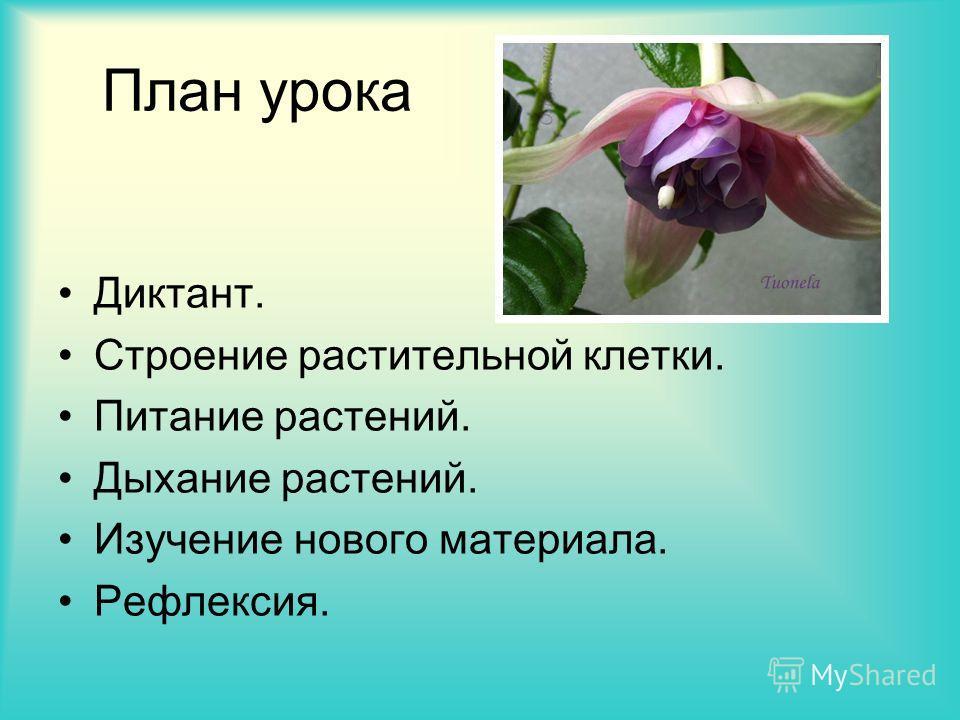 План урока Диктант. Строение растительной клетки. Питание растений. Дыхание растений. Изучение нового материала. Рефлексия.