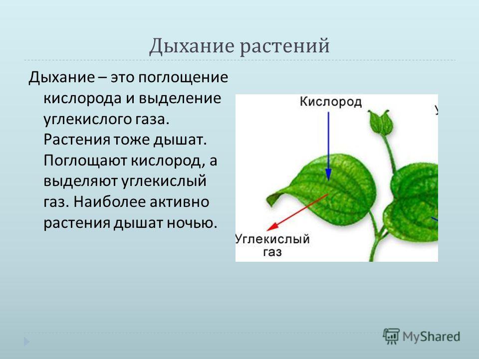 Сжатое дополнительное сообщение на тему дыхание растений в 6 классе