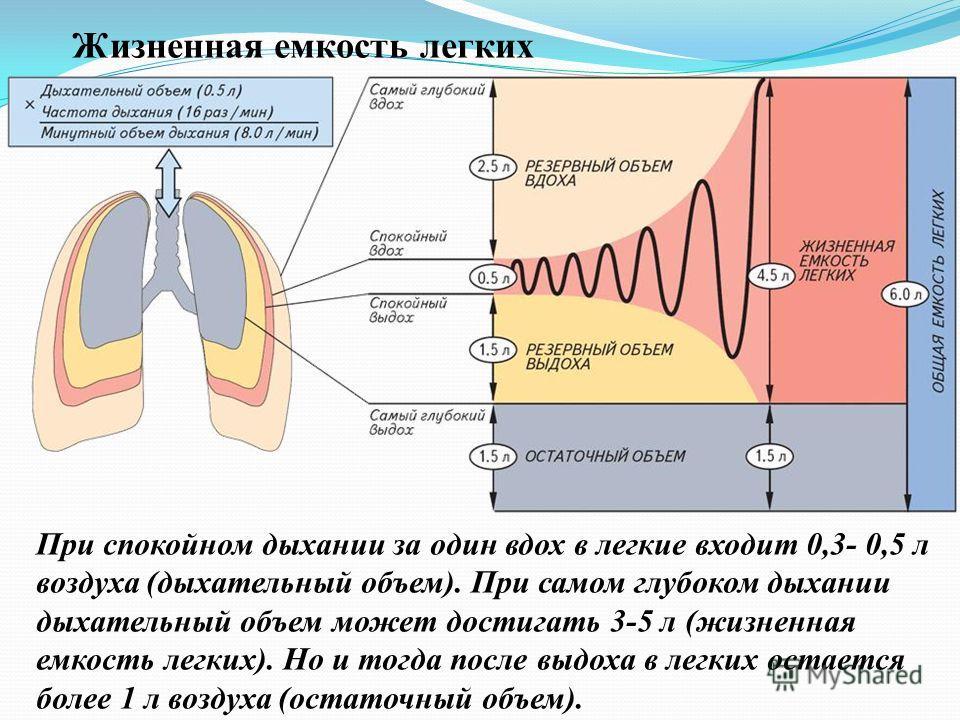При спокойном дыхании за один вдох в легкие входит 0,3- 0,5 л воздуха (дыхательный объем). При самом глубоком дыхании дыхательный объем может достигать 3-5 л (жизненная емкость легких). Но и тогда после выдоха в легких остается более 1 л воздуха (ост