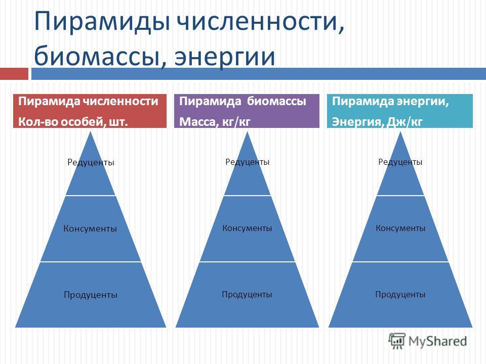 Пирамиды численности, биомассы, энергии Редуценты Консументы Продуценты Редуценты Консументы Продуценты Пирамида численности Кол - во особей, шт. Пирамида биомассы Масса, кг / кг Редуценты Консументы Продуценты Пирамида энергии, Энергия, Дж / кг