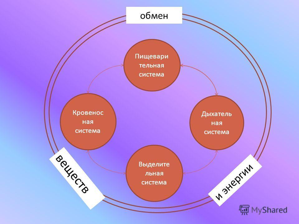 Пищевари тельная система Выделите льная система Дыхатель ная система Кровенос ная система веществ обмен и энергии