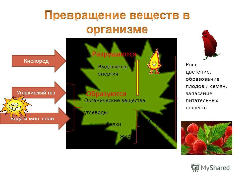Кислород Углекислый газ Вода и мин. соли Органические вещества углеводы белки жиры Построение новых клеток Рост, цветение, образование плодов и семян, запасание питательных веществ Образуются Разрушаются Выделяется энергия