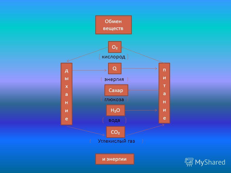 Обмен веществ и энергии О Q Сахар НО СО кислород энергия глюкоза вода Углекислый газ