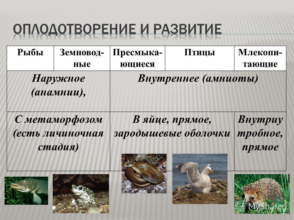 РыбыЗемновод- ные Пресмыка- ющиеся ПтицыМлекопи- тающие Наружное (анамнии), Внутреннее (амниоты) С метаморфозом (есть личиночная стадия) В яйце, прямое, зародышевые оболочки Внутриу тробное, прямое