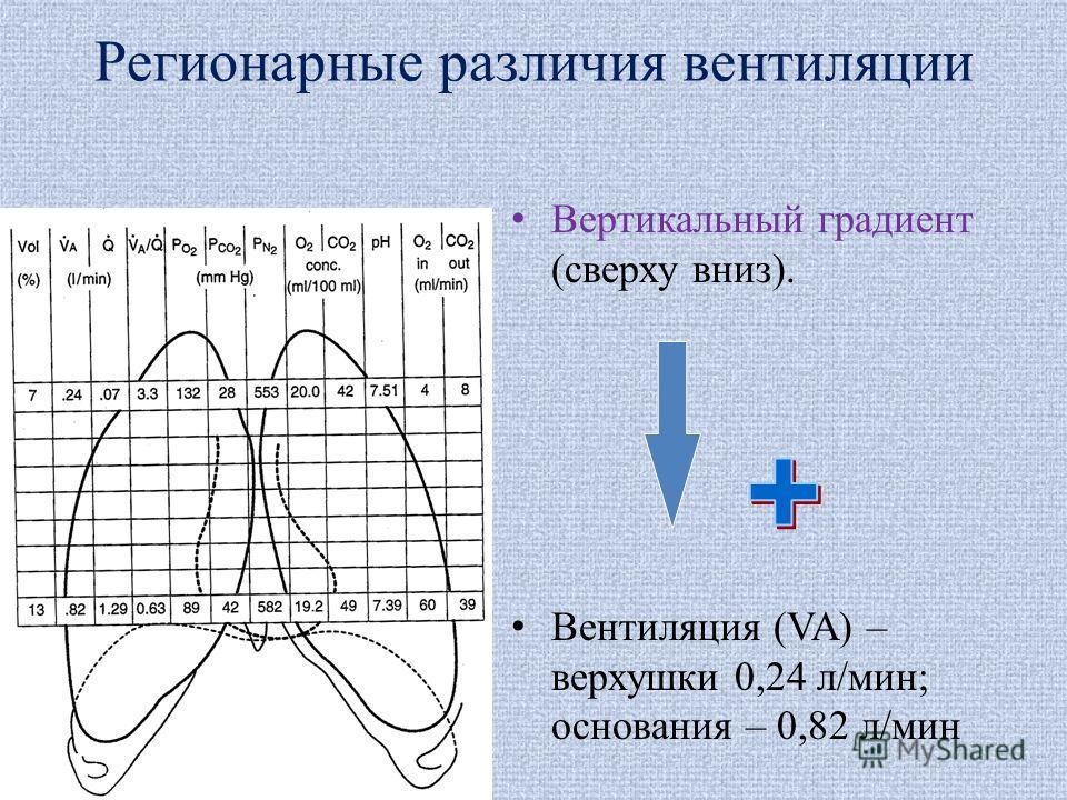 Регионарные различия вентиляции Вертикальный градиент (сверху вниз). Вентиляция (VA) – верхушки 0,24 л/мин; основания – 0,82 л/мин